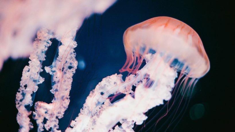 Aquarium méduse